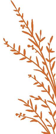 plant_b_v